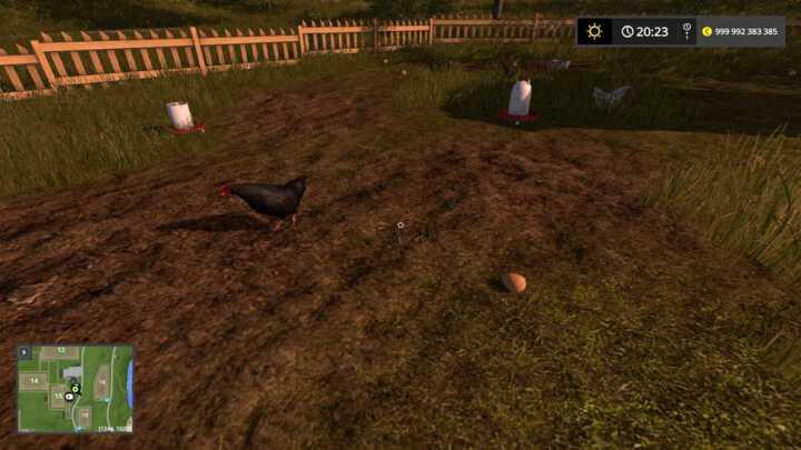 Ce n'est pas encore Pâques mais vous pouvez faire la chasse aux œufs. Les poules pondent partout.