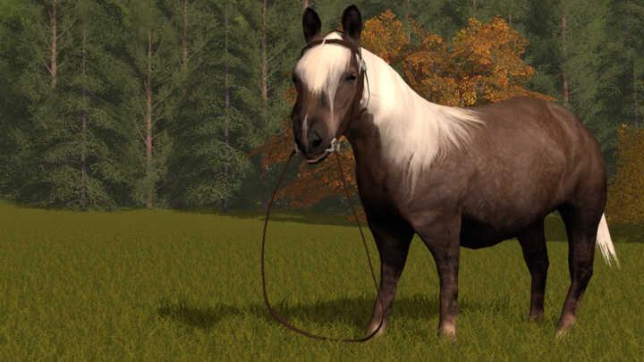 poney-FS17-2