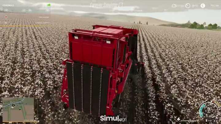 La récolte du coton.