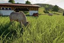 Photo de Cattle Breeds: Beef in Farming Simulator 19