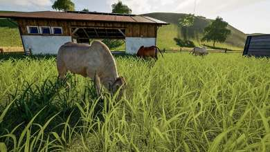 Photo de Cattle Breeds : la viande bovine dans Farming Simulator 19