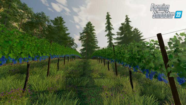 vignes olives fs22 03